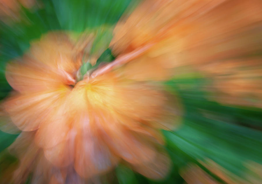 Peach Floral Abstract by R Scott Duncan