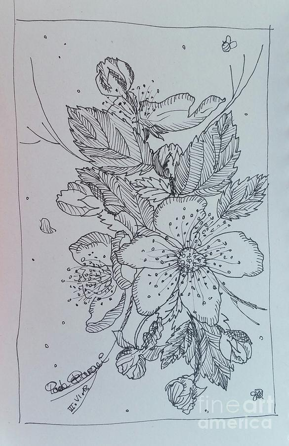 Peach Flowers Drawing by Paola Baroni