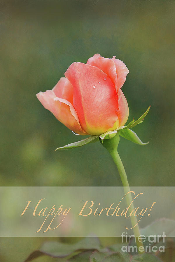 Peach Rose Happy Birthday by Sharon McConnell