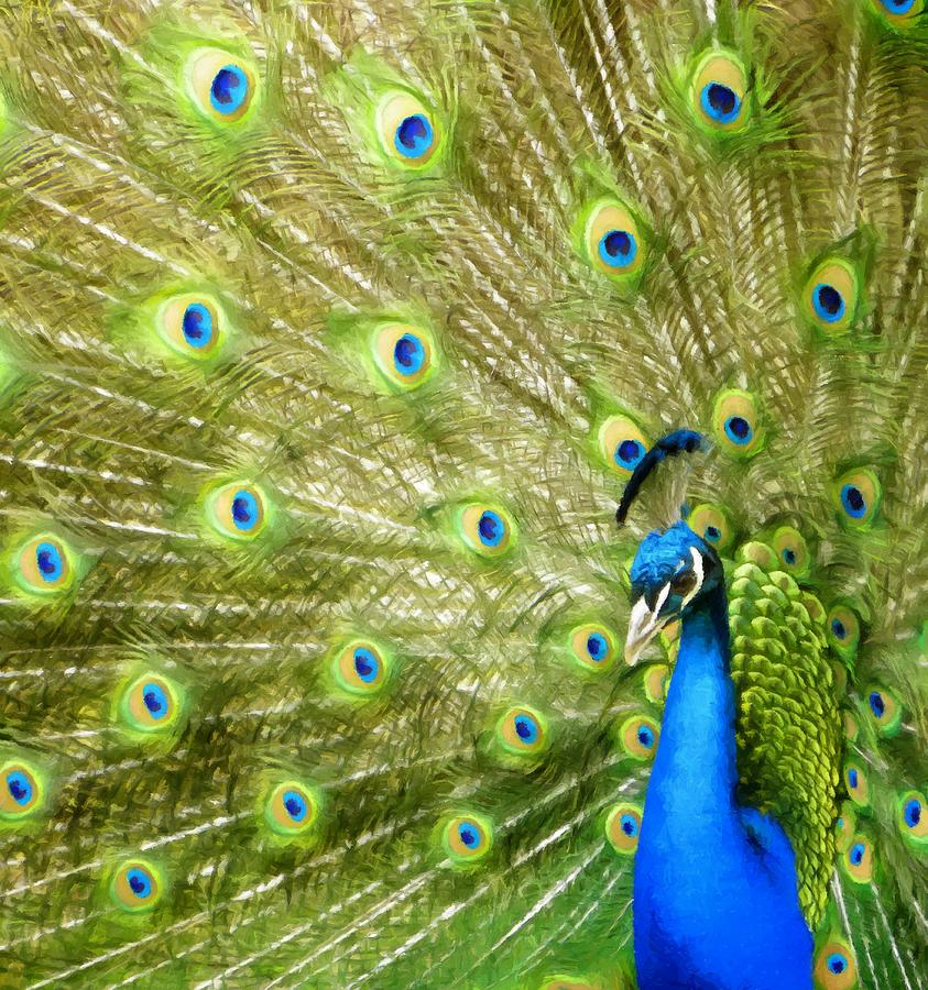 Peacock Colorful Feather Display by Sandi OReilly