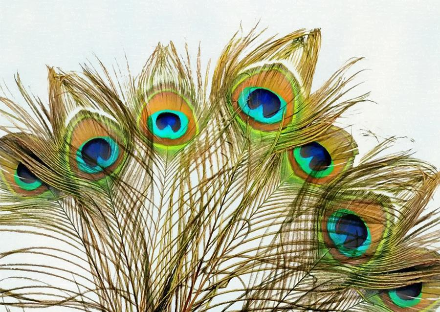 Peacock Feathers Painted by Sandi OReilly