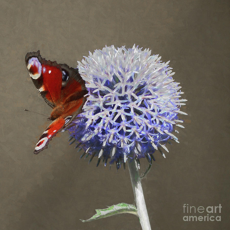 Peacock Butterfly Mixed Media - Peacock On Blue Thistle by Helen White