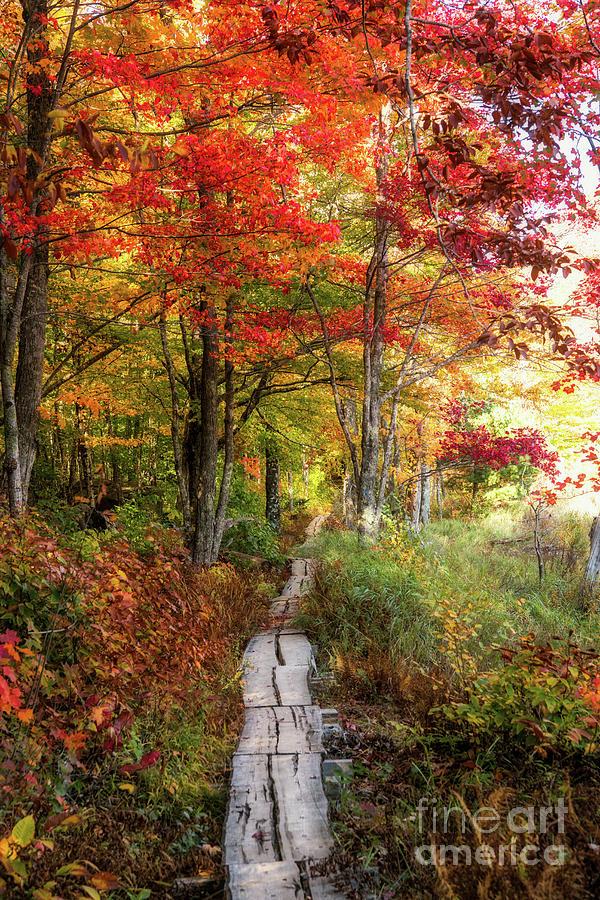 Peak Colors by Susan Garver