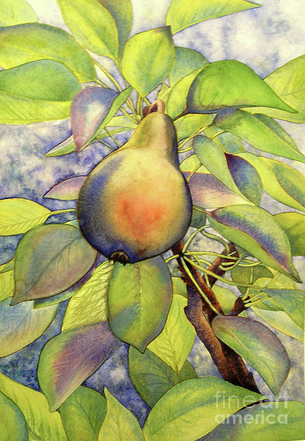 Pear of Paradise by Amy Stielstra