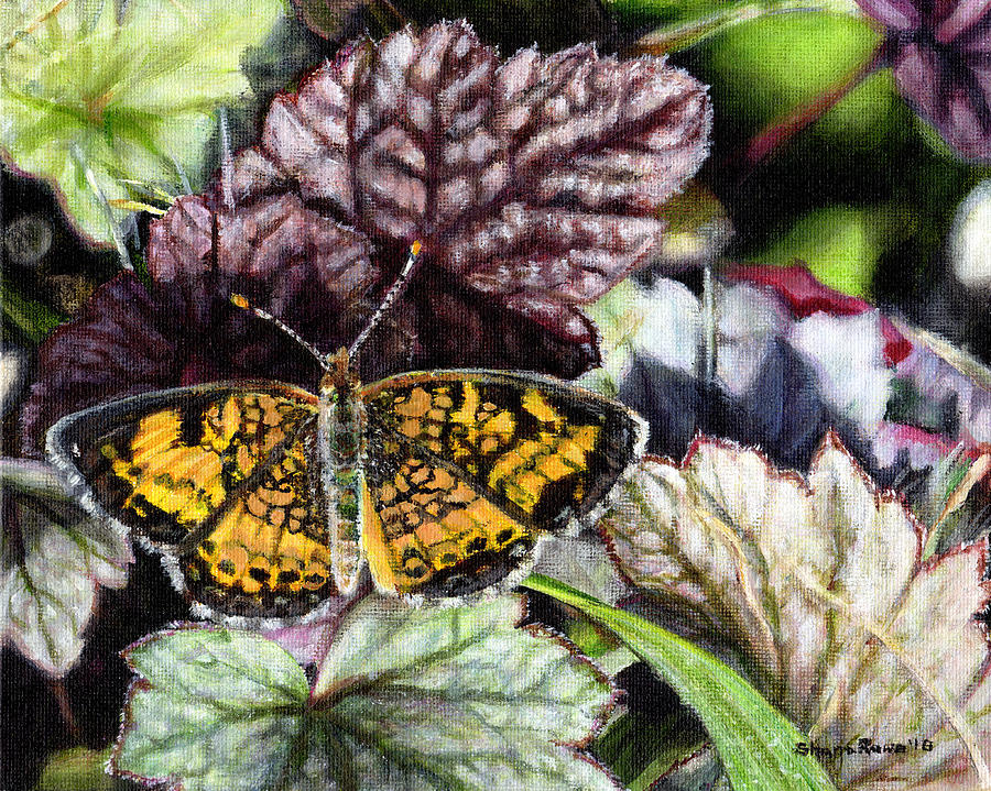 Pearl Crescent on Coral Bells by Shana Rowe Jackson
