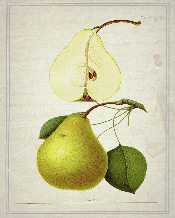 Food Mixed Media - Pears 2 by Natasha Wescoat