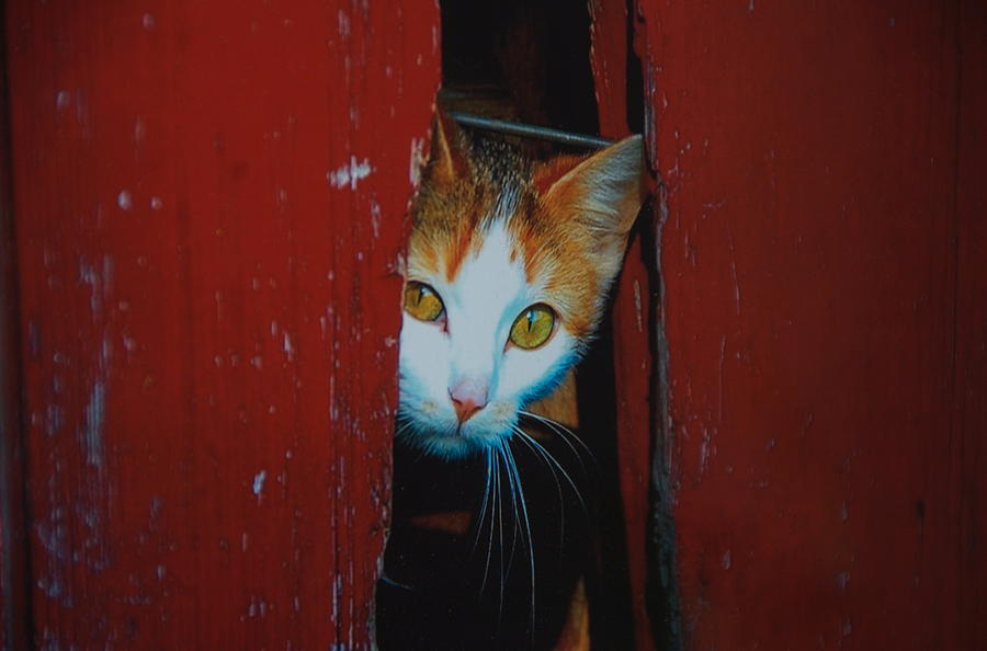 Cat Photograph - Peek A Boo Kitty by Marty Klar