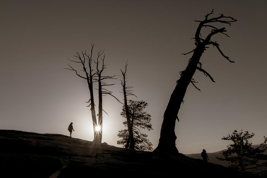 Peek-a-boo Sun by Marzena Grabczynska Lorenc