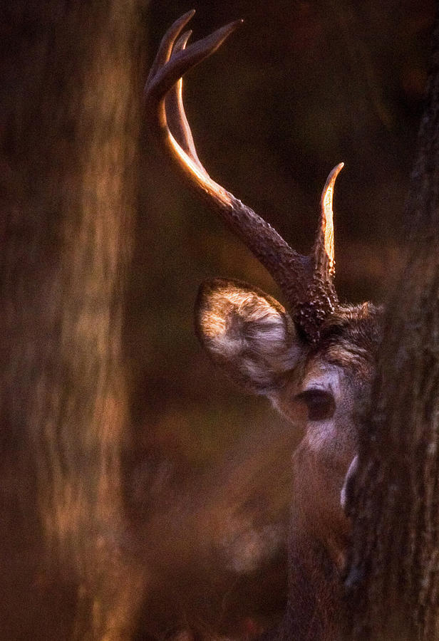 Peeking by Jeff Phillippi