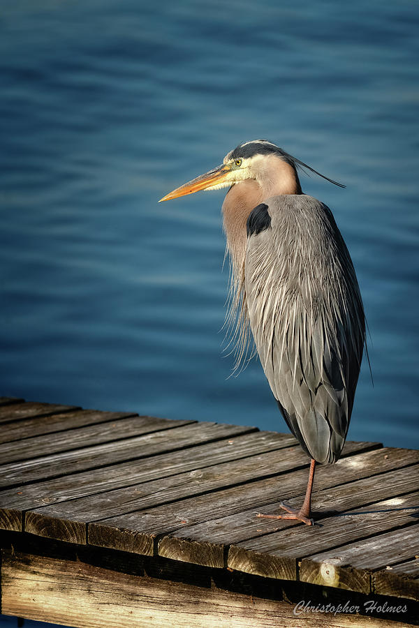 Peering Off The Pier by Christopher Holmes