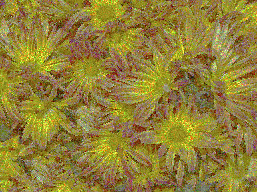 Flowers Digital Art - Pelee Mums Plus by Bruce Iorio