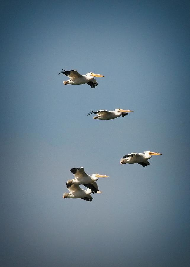 Pelican Air Force by John Bates
