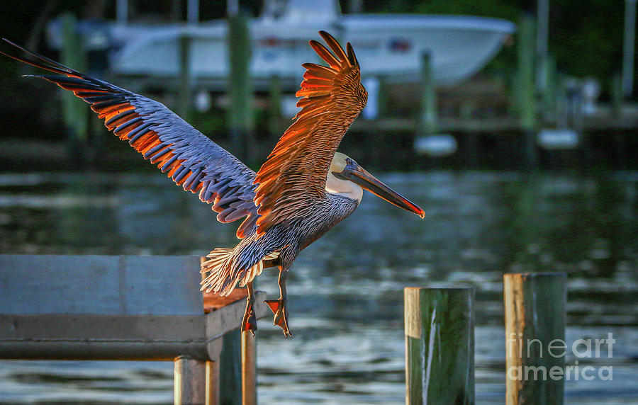 Pelican Approach by Tom Claud