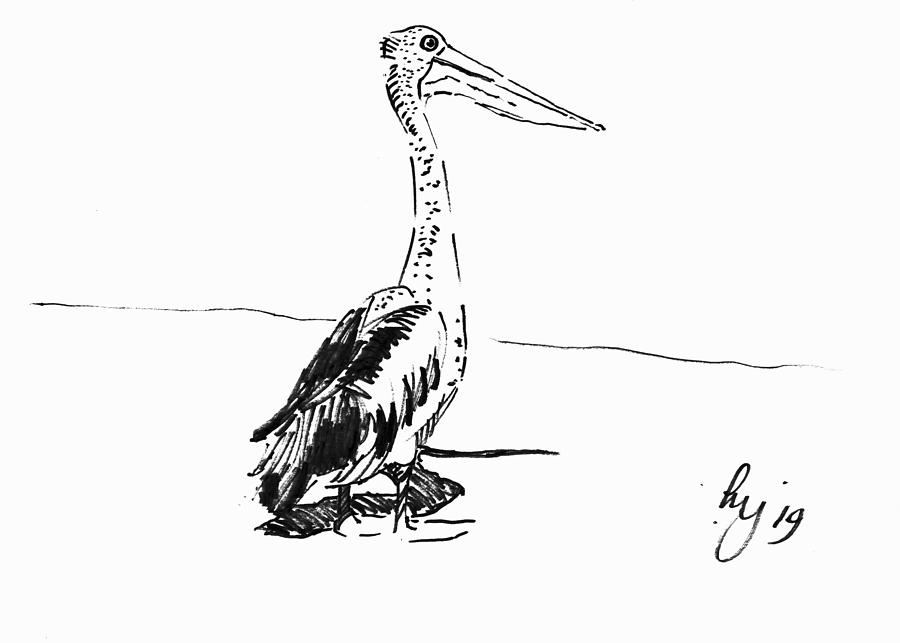 Pelican drawing by Mike Jory