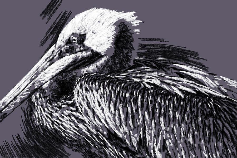 Pelican En Charcoal by Alice Gipson