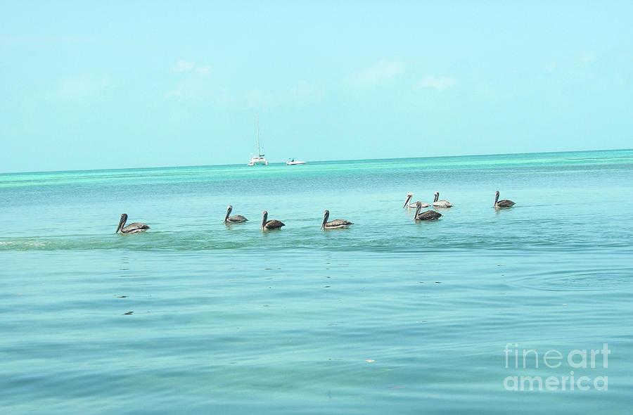 Pelican Gang by Randall Saltys