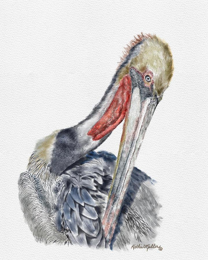 Pelican by Kathie Miller