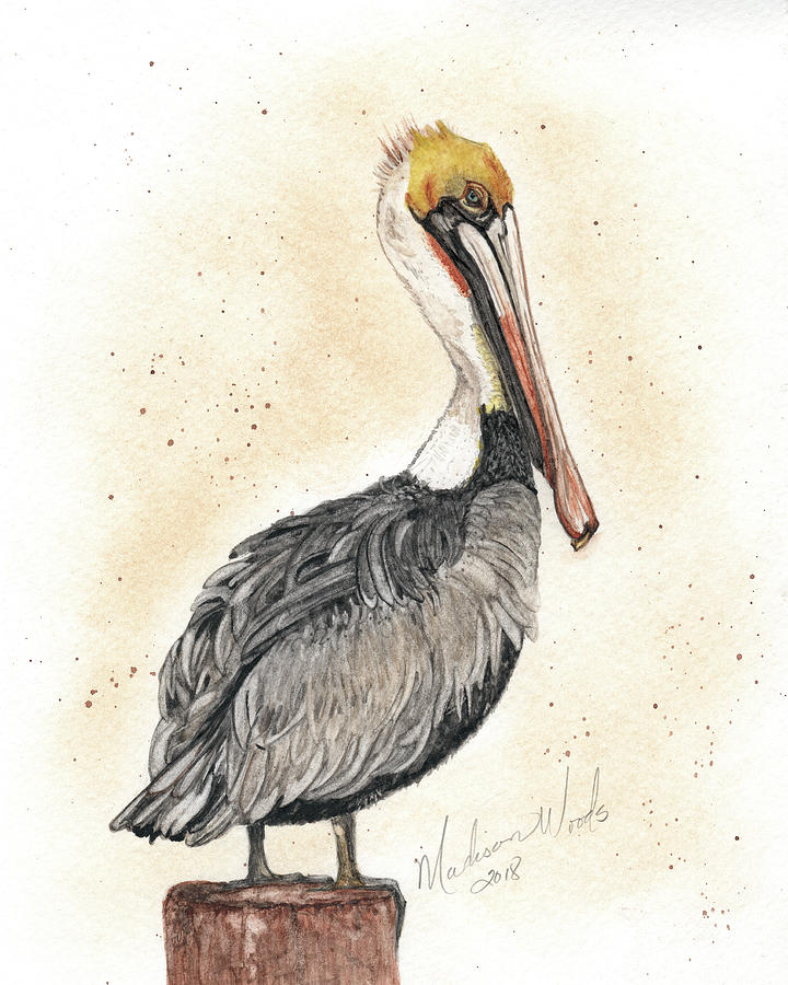 Pelican Painting - Pelican No 1 by Madison Woods