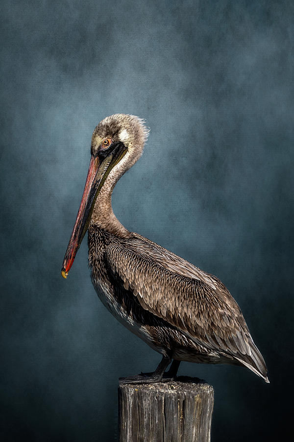 Pelican On A Piling by Cyndy Doty