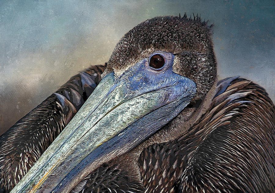 Pelican Portrait  by HH Photography of Florida