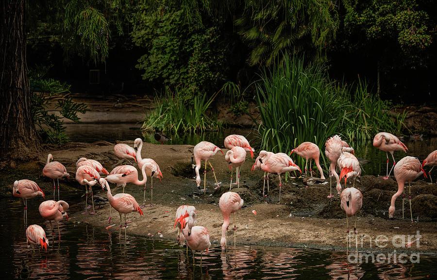 Pelicans Anyone? by Julian Starks