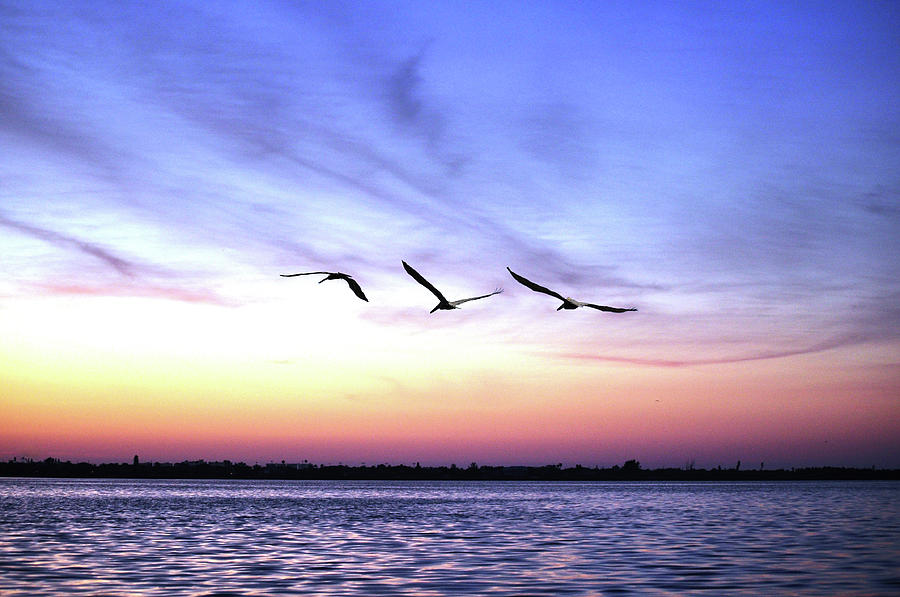 Pelicans At Sunrise Photograph by Photo By Ladora Sims