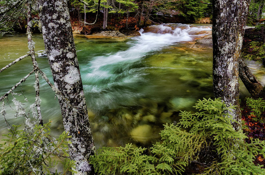 Pemigewasset River, Basin Trail NH by Michael Hubley