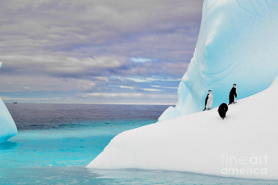 Arctic Photograph - Penguins In Iceberg In Antarctica Pole by 2j Architecture