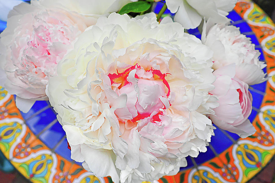 Peonies on a Garden Table by William Jobes