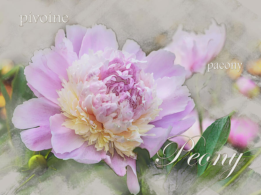 Peony 2 Graphic by Mark Mille