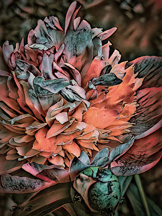 Peony by Bearj B Photo Art