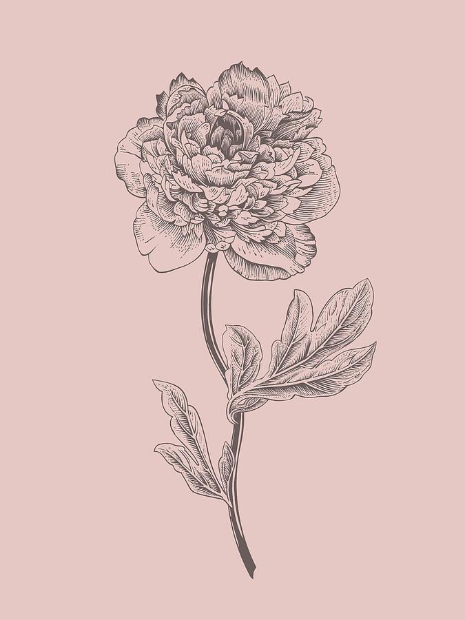 Peony Mixed Media - Peony Blush Pink Flower by Naxart Studio