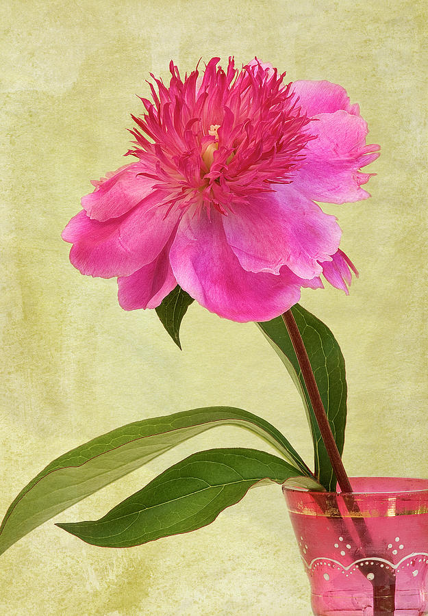 Peony In Pink Vase Photograph by © Leslie Nicole Photographic Art
