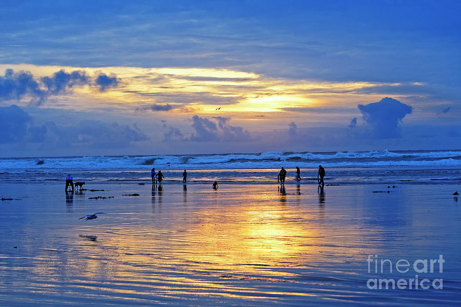 People Photograph - people recreation fun dog digging razor clams low tide ocean beach radiant blue gold sunset USA by Robert C Paulson Jr