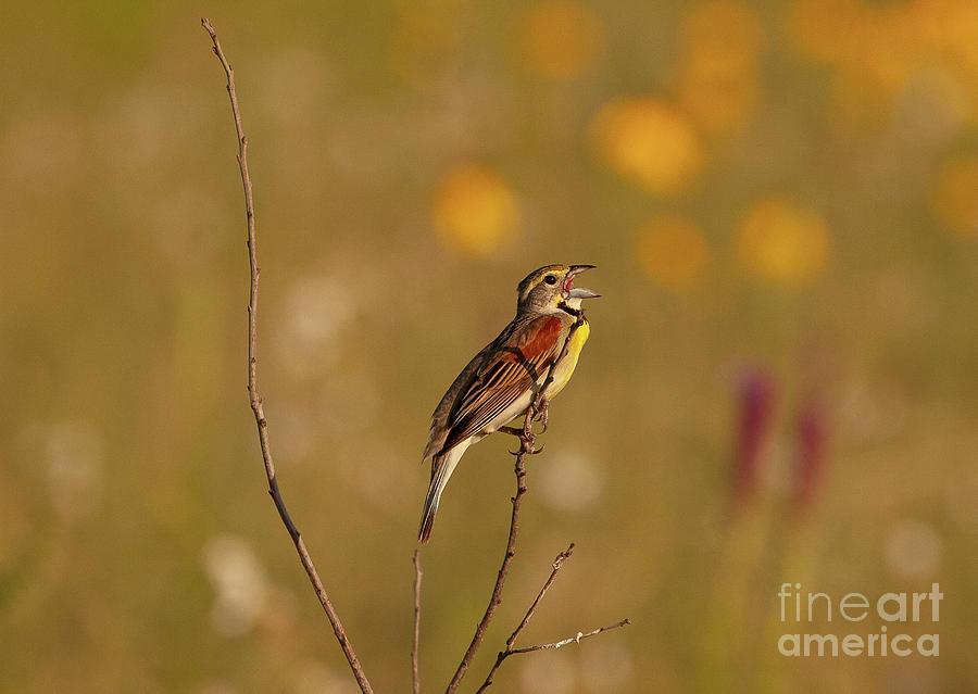 Animals Photograph - Perched Beauty H.e. Flanagan Prairie Charleston, Arkansas by Michael Vance Pemberton