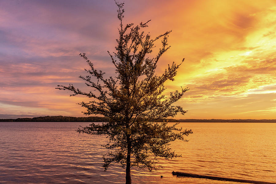 Percy Priest Lake Sunset Young Tree by D K Wall