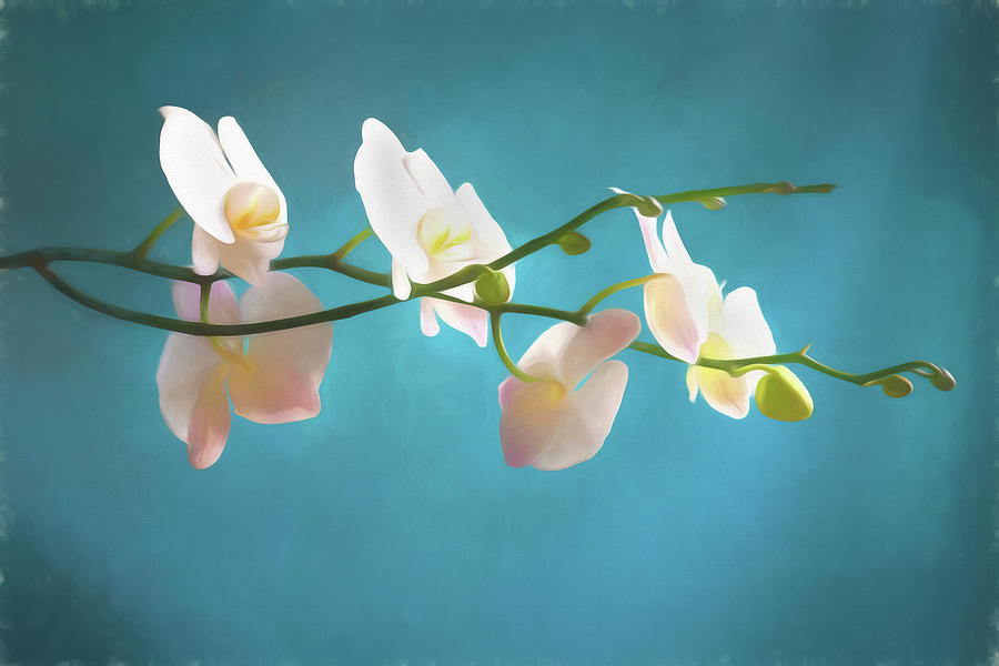 Perfect Phalaenopsis Orchid 109 by Rich Franco