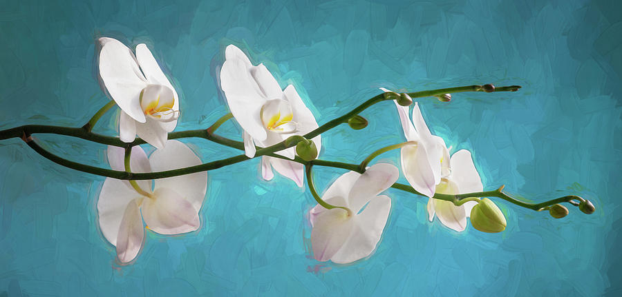 Perfect Phalaenopsis Orchid 110 by Rich Franco