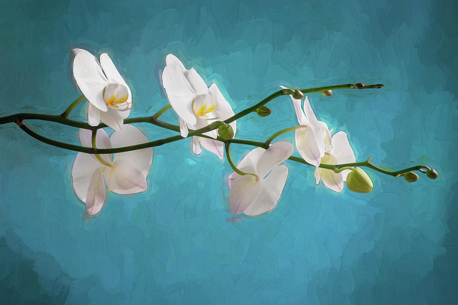 Perfect Phalaenopsis Orchid 111 by Rich Franco