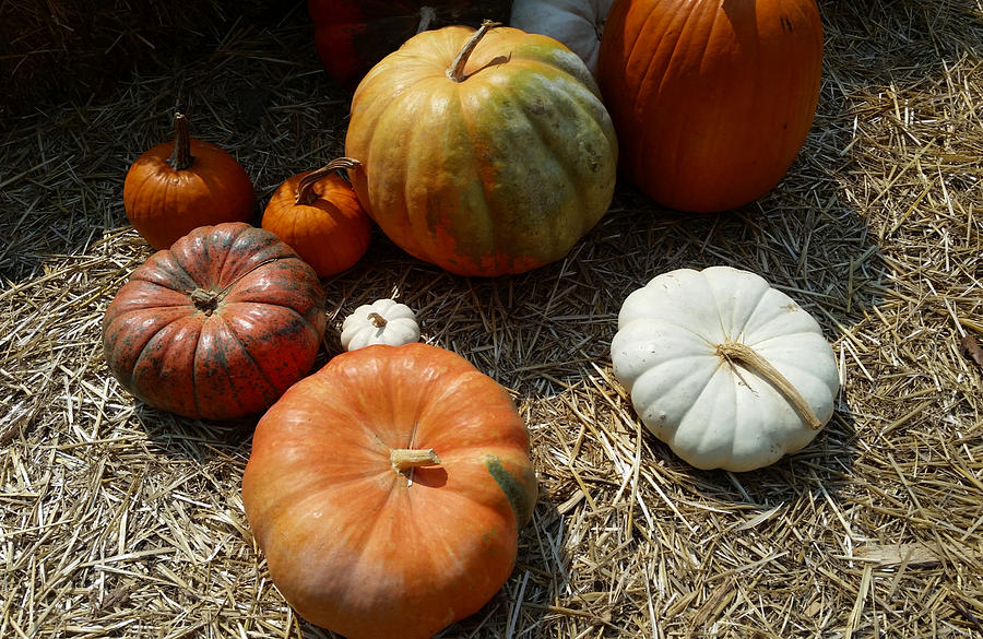 Perfectly Perfect Pumpkin Perfection Photograph
