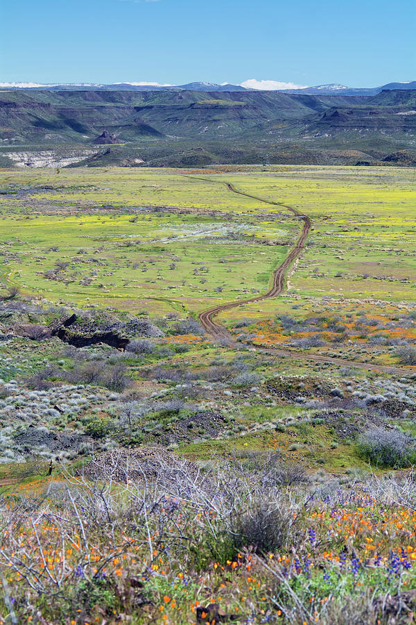 Peridot Mesa 5812-031419 by Tam Ryan