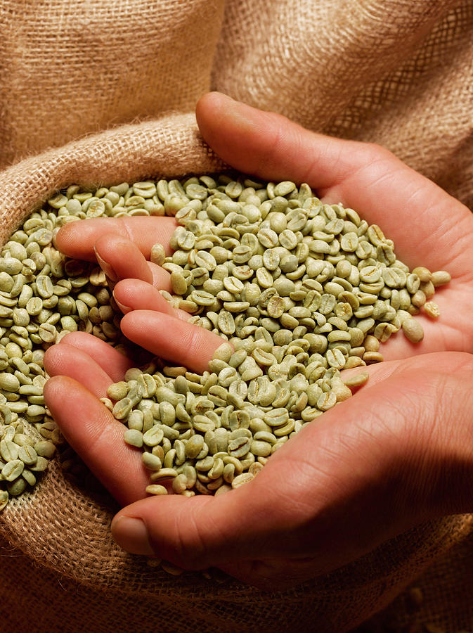 Person Holding Handful Of Green Coffee Photograph by Peter Dazeley