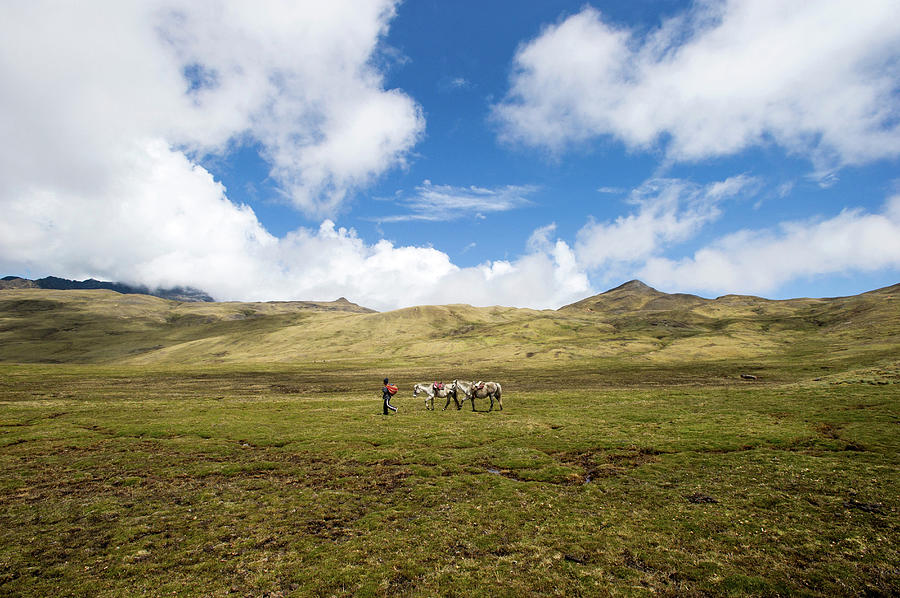 Person With Horses On High Pass 4350m Photograph by Cultura Rm Exclusive/karen Fox