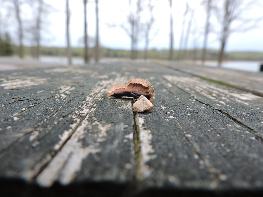 Wood Photograph - Perspective by Stacey Wells