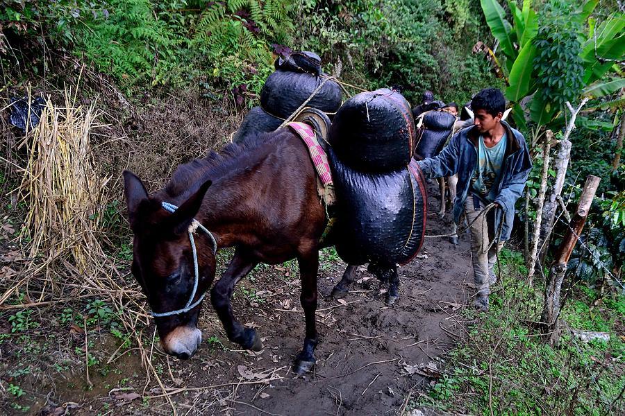 Peru-coffee Photograph
