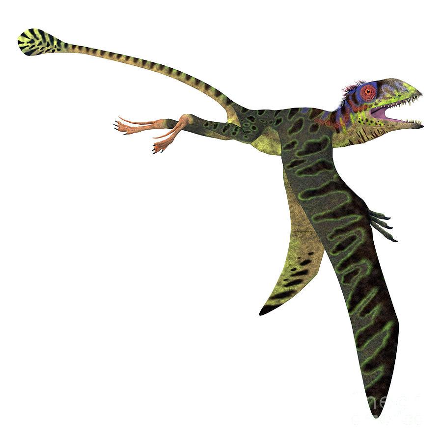 Peteinosaurus Reptile Wings Down by Corey Ford