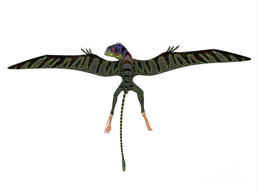 Peteinosaurus Reptile Wings Spread by Corey Ford