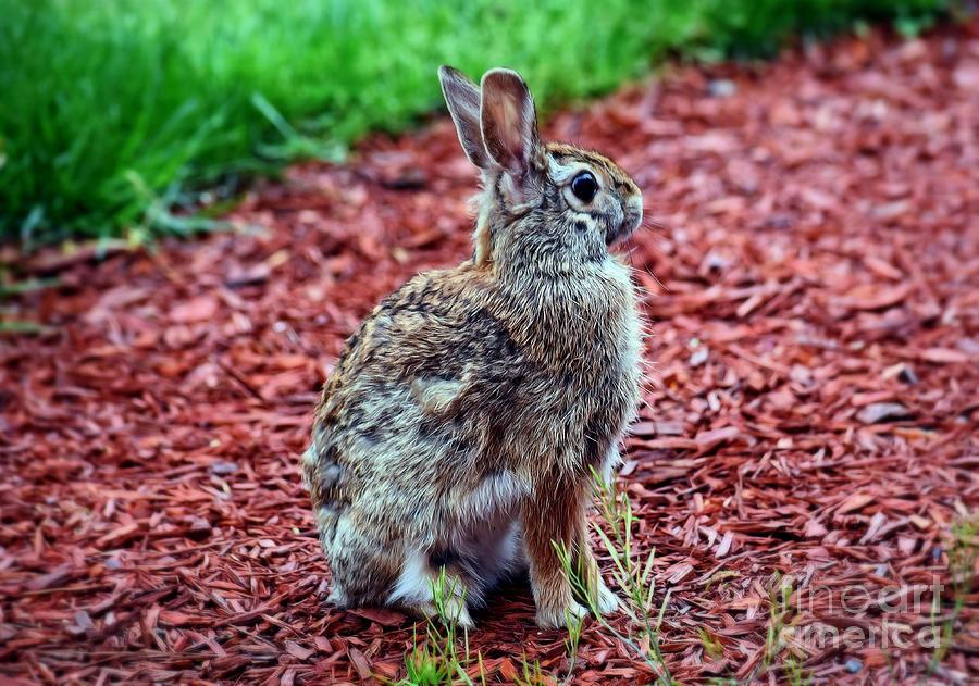 Peter Rabbit Four by Patti Whitten