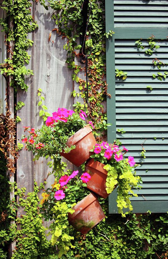 Petunia Flower Pots by Cynthia Guinn