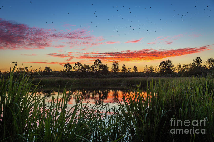 Phinizy Swamp Sunrise - Augusta GA by SANJEEV SINGHAL